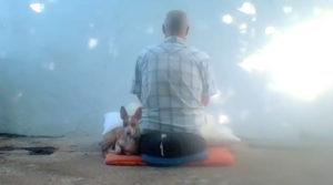 Dojo Zen | Budismo Zen en Barcelona | 2021/01/16 Retir urbà presencial/on line. Del 16 al 17 de gener